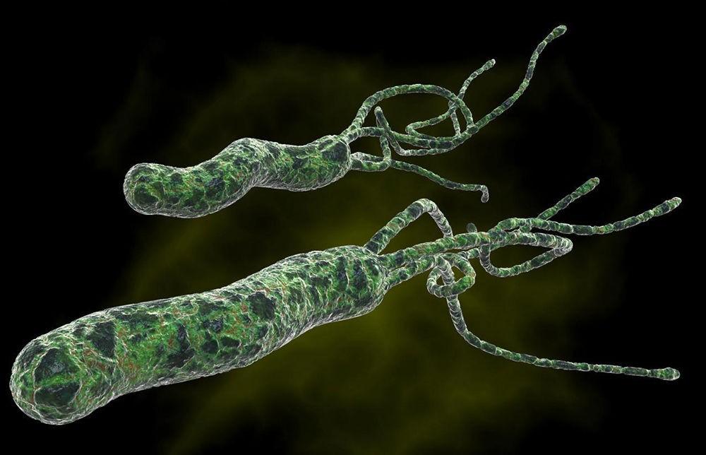 Микроорганизм Helicobacter Pylori