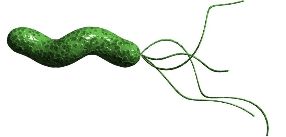helicobacter pylori вызывает гастрит