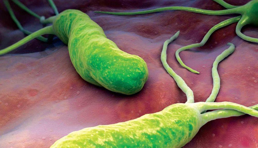 helicobacter вызывает гастрит