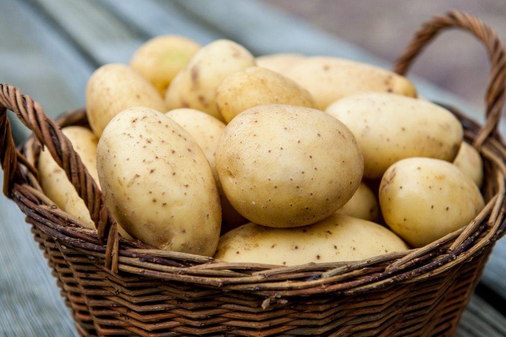 картофель при гастрите