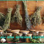 Лечение гастрита травами