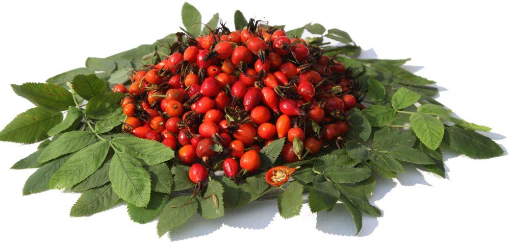 плоды шиповника для лечения гастрита