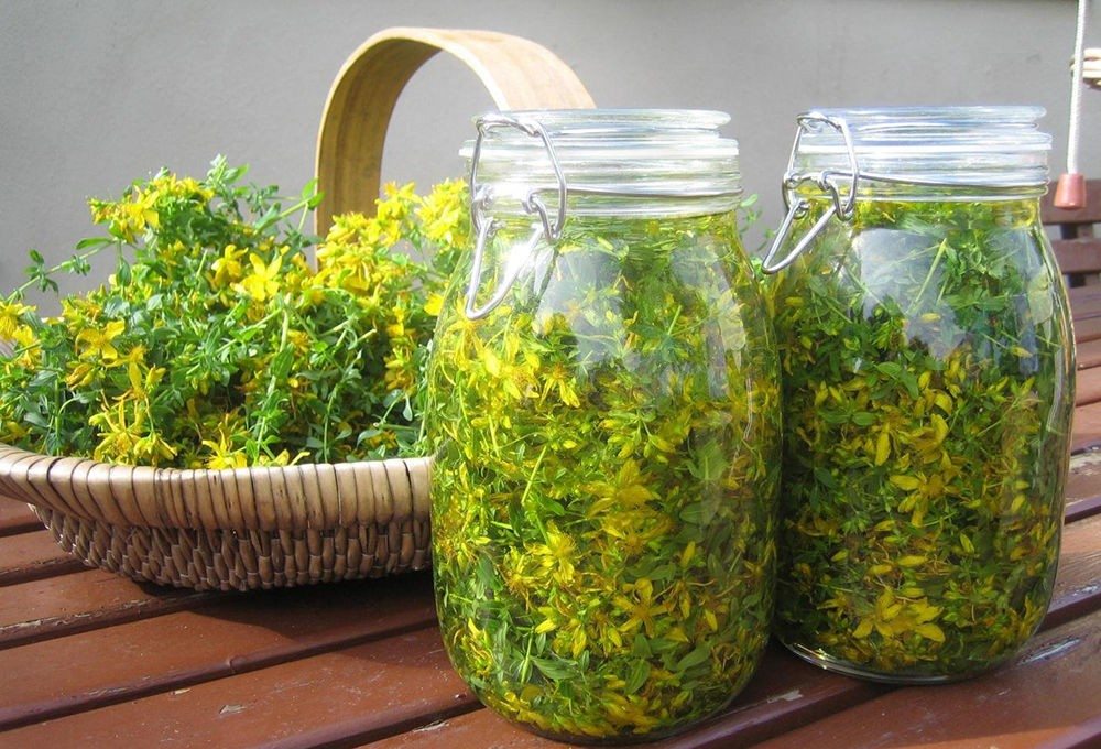 Травяной сбор из зверобоя и сушеницы