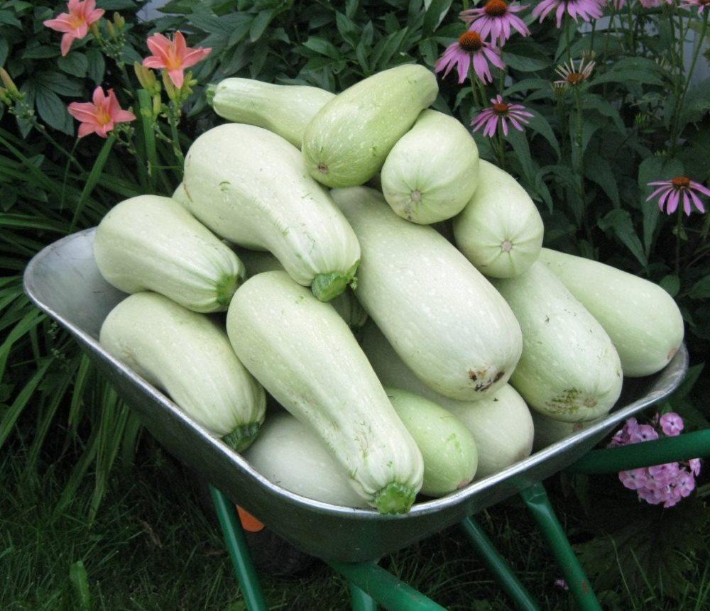 белые овощи при гастрите