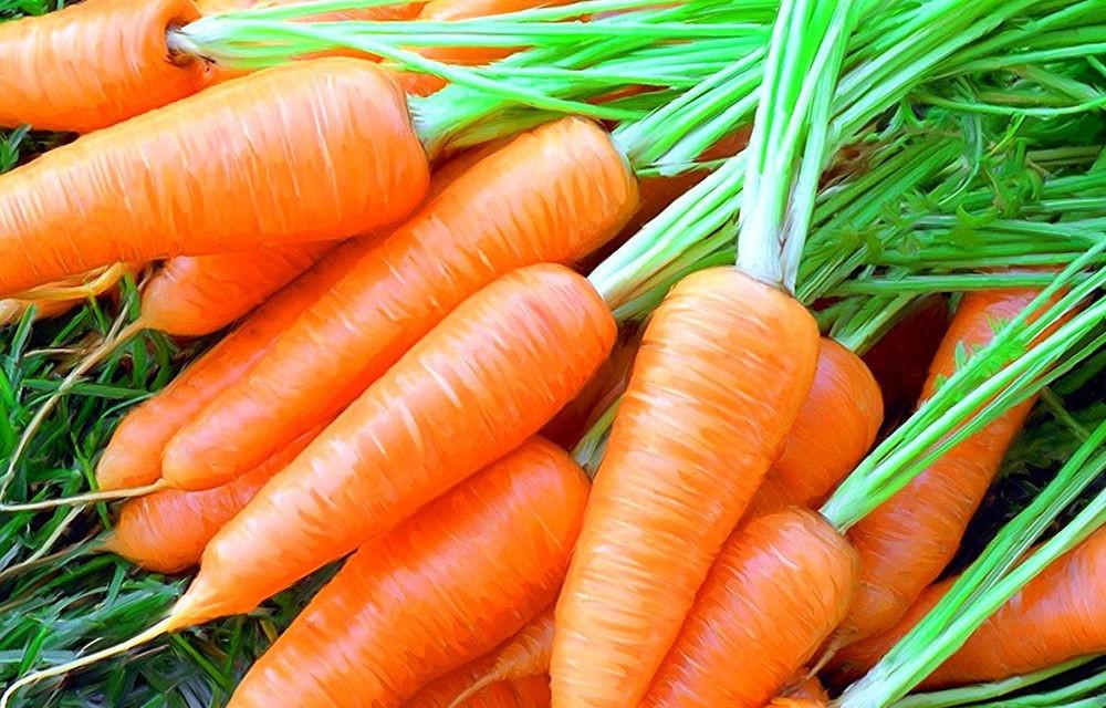 Влияние моркови