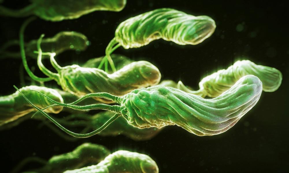 Злокачественная бактерия Helicobacter pylori